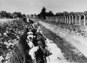 Trabajadores forzados en el campo de Neuengamme. Fuente: USHMM